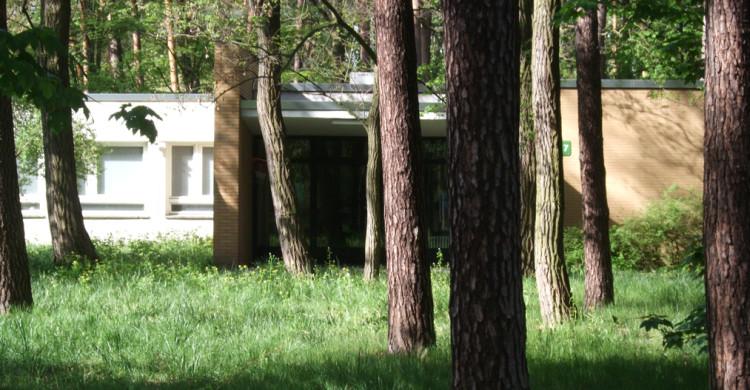 Das Gelände des ehemaligen Oskar-Helene-Heims ist durch Waldbaumbestand und verlassene Gebäude geprägt.